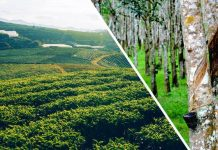 real estate rubber plantations